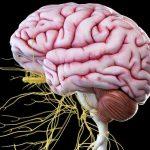 8 نشانه احتمال ابتلا به آسیب عصبی