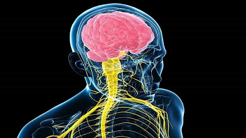 سیستم عصبی انسان