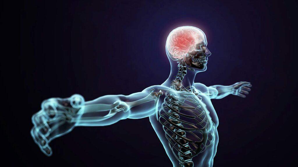 سیستم عصبی پیکری