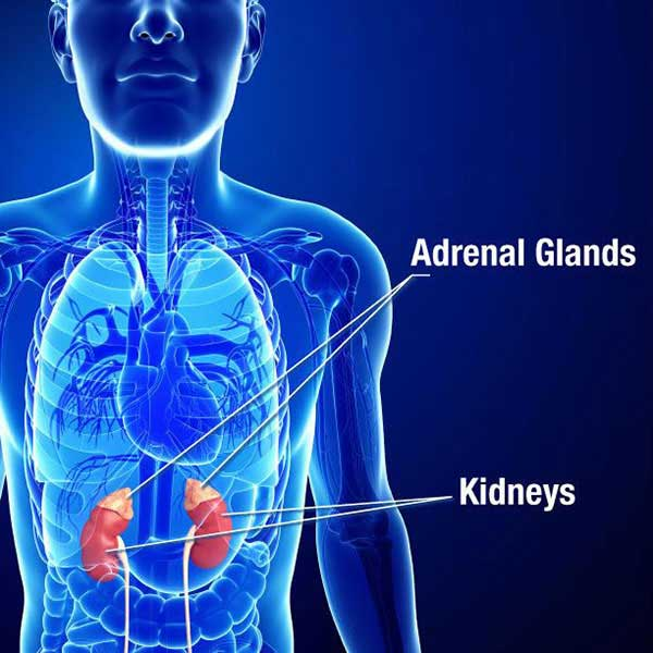 Adrenal_Insufficency